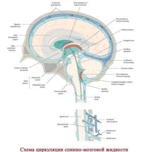 циркуляция спинно-мозговой жидкости
